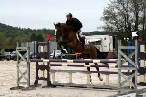 Quelques chevaux vendus img6034-300x200
